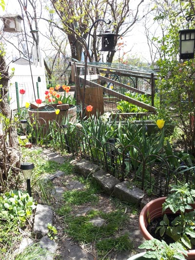 Early spring garden view
